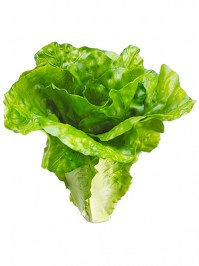 Aldik Home's Deliciously Realistic Fruits & Vegetables - Lettuce