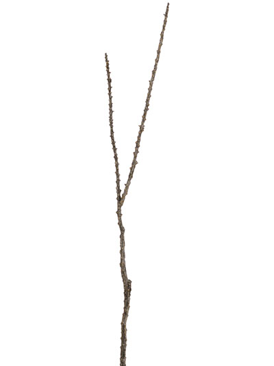 Aldik Home's Incredibly Realistic Silk Plants - Camel Whip Twig