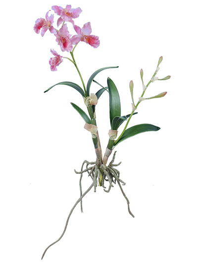 Aldik Home's Incredibly Realistic Silk Orchids - Cattleya