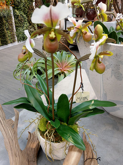 Aldik Home's Stunning Silk Floral Arrangements - Lady Slippers