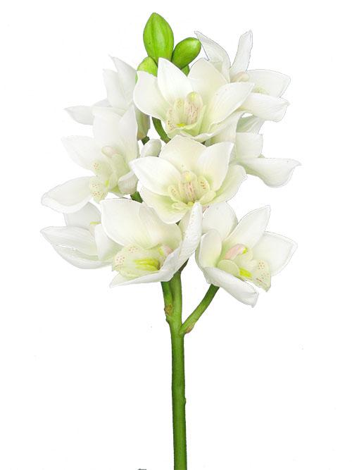 Silk flowers cymbidium orchid 19 in white aldik homes realistic silk flowers cymbidium orchid mightylinksfo