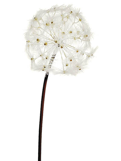 Aldik Home's Incredibly Realistic Silk Flowers - Dandelion