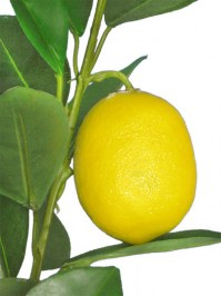 Lemon_Branch_32__4e2def07d7745.jpg