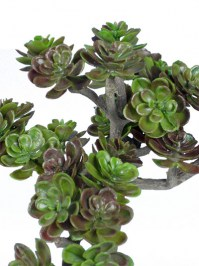Sedum_Pick_5_in._4d6d7d79cd68a.jpg