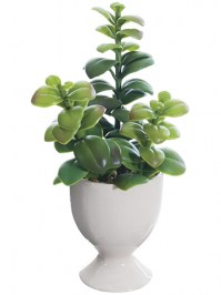 Aldik Home's Stunning Silk Plants - Jade in Cup