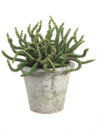 Aldik Home's Quality Artificial Succulents - Potted Worm Succulent
