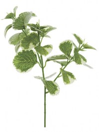 Aldik Home's Incredibly Realistic Silk Plants - Oregano Pick