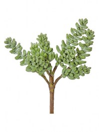 Aldik Home's Quality Artificial Succulents - Dogtail Succulent