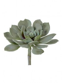 Aldik Home's Quality Artificial Succulents - Succulent 7.5 in.