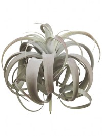 Aldik Home's Quality Artificial Succulents - Tillandsia Plant