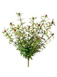 Aldik Home's Incredibly Realistic Silk Plants - Flowering Moss Plant