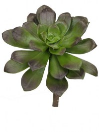 Aldik Home's Quality Artificial Succulents – Echeveria
