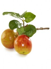 Aldik Home's Deliciously Realistic Fruits & Vegetables - Apple Branch