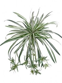 Aldik Home's Incredibly Realistic Silk Plants - Spider Plant